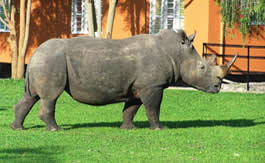 1 day ziwa rhino tracking day trip Uganda