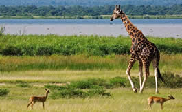 Murchison Falls National Park tour Uganda