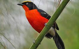 Birding Tours in Uganda