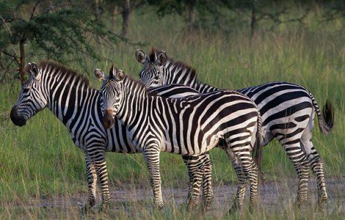 Lake Mburo National park Uganda