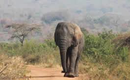 Akagera National Park Rwanda